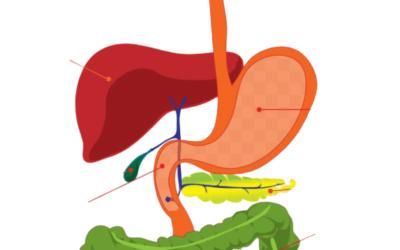 Ayurveda to balance digestive fire